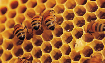 Today's DDT? Scientists Declare Bee-Killing Pesticides Must Be Banned