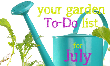 Your 'To-Do' List for Gardening in July