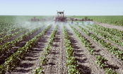 Did Pesticides Cause Your Food Poisoning?