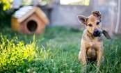 6 Summer Safety Tips For Your Dog That You Probably Don't Think About
