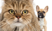 Are You a Cat or Dog Expert? (Quiz)