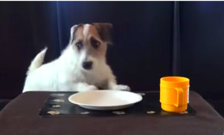 Is Your Dog the Head of the Household? (Video)