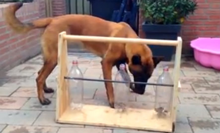 Creative Homemade Toy Keeps This Dog Happy (Video)
