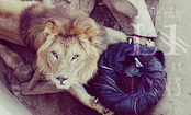 Jeans Designed by Lions, Tigers & Bears