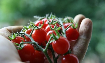 How & When to Harvest Summer Produce