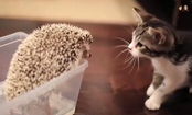 Watch This Kitten and Hedgehog Become Best Friends