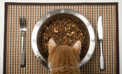 What Your Cat's Mealtime is Missing