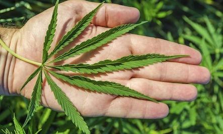 Should Marijuana be Legalized?