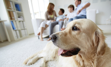 Are Your Carpet Cleaners Poisoning Your Pets?
