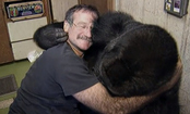 In Memory of Robin Williams and His Love of Gorillas