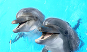Dolphins & Whales Squeal, But Why?
