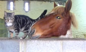 Cat Loves Cuddling With Horse (Video)