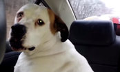 Dog Says, 'Yes, I Ate The Tissue & I'm Sorry' (Video)