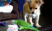 Dog & Parrot in Fierce Competition Over Last Bite of Yogurt (Video)