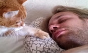Cat Alarm Clocks Are So Annoying. And So Cute (Video)