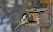 7 Ways to Protect the Birds in Your Yard