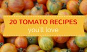 17 Tomato Recipes You Will Love