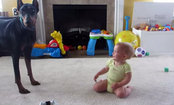 Doberman & Baby Play Hide & Seek (Video)