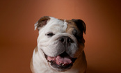 13 Friendliest Dog Breeds