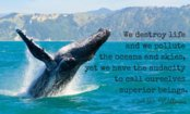If You Love Whales, Fight for a Silent Ocean