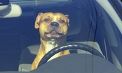 What to Do If You See a Dog Locked in a Hot Car