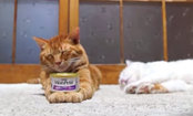 This Cat Will Sleep Through Anything (Video)