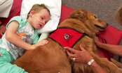 Amazing Footage of Therapy Dog Helping Small Boy Heal