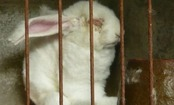 The Horror of Angora Fur & What One Care2 Member Did About It