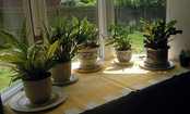 What You MUST Know Before Bringing Plants Indoors