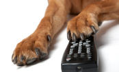 TV Can Hurt Dogs (But Not in the Way You Might Guess)