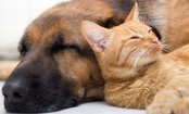 Ebola in Cats and Dogs: What We Know (And Don't Know)