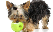 Best & Worst Fruits and Veggies for Pets