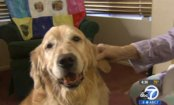 Heroic Dogs Save Owner's Life by Snuggling