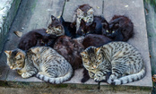 Why You Should Care About Feral Cats — and How You Can Help Them