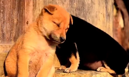 Cats & Dogs Need to Nap Right Now (Video)