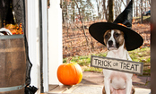 5 Tips for Keeping Pets Safe On Halloween
