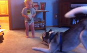 Husky & Baby Have a Relationship Full of Happiness (Video)