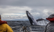 Save the Whales – and Other Marine Animals in New England's Fisheries