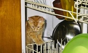 27 Dishwasher Maintenance Tips to Maximize Performance