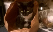 Cat in a Bag–Caption Contest Winners!