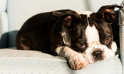 13 Cuddliest Dog Breeds