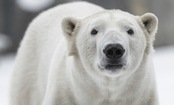 Care2 Member Pleads: Canada, Stop Hunting Endangered Polar Bears!