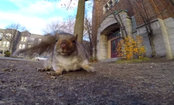 Squirrel Steals GoPro Camera & Takes it Up a Tree (Video)