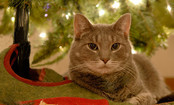 7 Holiday Dangers for Pets — and How to Avoid Them