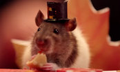 Tiny Hamster Eats Mini Thanksgiving Feast with Friends (Video)