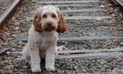 New Facial Recognition App Helps Locate Lost Dogs