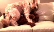 Dog Comforts Friend Having Bad Dream (Video)