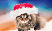 5 Reasons Cats and Dogs Are Excited for Christmas