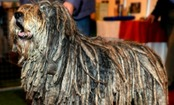 4 New Dog Breeds Introduced By AKC