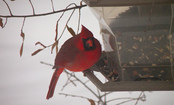 Winter Bird Feeding: 7 Tips & Recipes